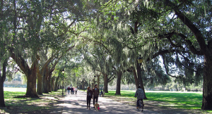 A walking and biking path  in Savannah with street trees covered in Spanish Moss. (Photo: Flickr, Carencey, Creative Commons)